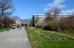 Lovely Dy in the Gardens (Jocey K) Tags: flowers trees newzealand christchurch sky people architecture buildings spring daisy pathway botanicgardens gardnes curatorshouse christchurchpublichospital