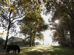 (AbAberson) Tags: house home licht pony zon drenthe weerwille warmte