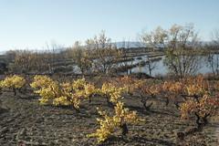 oskarbi (eitb.eus) Tags: eitbcom 27117 g1 tiemponaturaleza tiempon2016 alava laguardia miguelangellopezdelacalle
