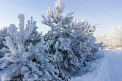 Anglų lietuvių žodynas. Žodis Siberia reiškia n Sibiras lietuviškai.