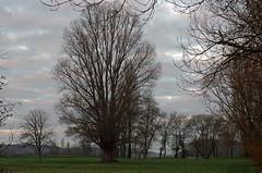 Pouill (Loir-et-Cher) (sybarite48) Tags: sky cloud france tree field feld himmel wolke cu boom pole ciel cielo rbol land campo nuage nuvem albero veld arbre rvore  baum nube hemel champ   bulut gkyz loiretcher agro aa    drzewo niebo chmura akker         pouill    prmeadowwiesepradopratoweidekaayr pouill