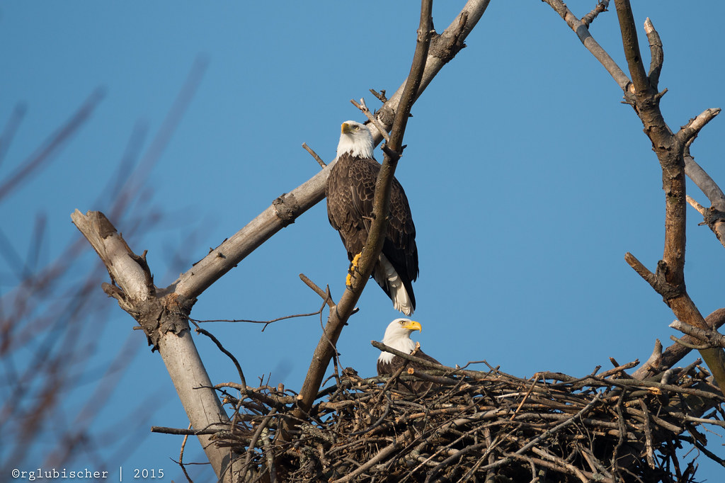The World S Best Photos Of Aerie And Eagle Flickr Hive Mind