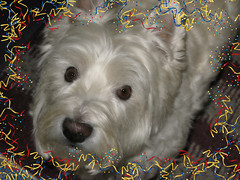 """Double the Fun, Double the Treats"" (ellenc995) Tags: riley westie westhighlandwhiteterrier birthday christmas rubyphotographer supershot thesunshinegroup sunrays5 ruby5 fantasticnature coth alittlebeauty challengeclub abigfave pet100 akob pet500 pet1000 pet1500 thegalaxy 100commentgroup"