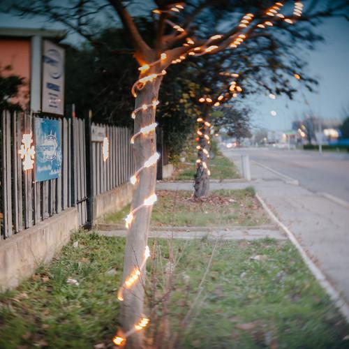 sad Christmas tree