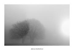Et la lumire fut (bertholino fabrice) Tags: blackandwhite tree nature monochrome nikon noiretblanc wildlife paysage arbre environnement 2015 biodiversit nikond600 dxofilmpack capturenx2 sigma105macrooshsm fabricebertholino bonreveillonatous