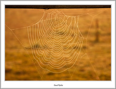 The Bat Formation - Or Web (flatfoot471) Tags: 2015 autumn dawn mist mugdock nature normal scotland stirlingshire unitedkingdom