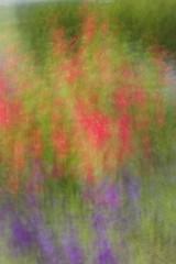 flowers at sunset (Mannington Creek) Tags: flowers monet red purple sunset dusk nature beauty outdoors pitman ngc