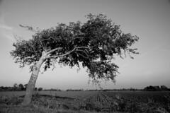 Veere Zoutelande DST_0383 (larry_antwerp) Tags: landscape wind veere zeeland nederland netherlands