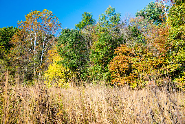 Jackson-Schnyder Nature Preserve - October 23, 2016