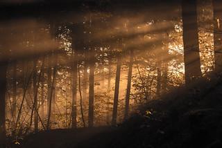 Ambiance brouillard  et soleil matinal