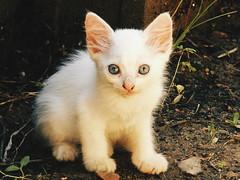 Eyes of the little tiger (leonardomuoz99) Tags: nikon coolpix p500 nikoncoolpixp500 discover blanco nature calle tierra cara mirada ojos trans