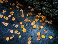Gold leaf (Patricia Colleen) Tags: golden leaves wetpavement rainyday goldleaf autumn