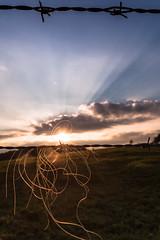 Rays and hair (Herr Olsen) Tags: stacheldraht barbwire hair haar zaun sonnenuntergang sunset himmel sky gegenlicht backligh