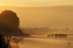 Mellow morning (PeterGrayPhoto) Tags: mellow morning gold sunrise water landscape waterscape warmia polska poland