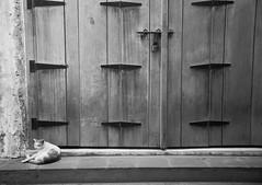 The Cat's Door (LensReady) Tags: cat door territorial ownership nightphotography nightscene antiquedoor animal feline fur d700 fullframe nikn 2485mm 3545