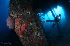 Wreck (Randi Ang) Tags: usatliberty libertywreck shipwreck wreckdive ship wreck dive liberty tulamben bali indonesia underwater scuba diving photography wide angle randi ang canon eos 6d fisheye 15mm randiang