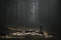 Damage We Have Done (milanvopalensky) Tags: boy man male me myself self portrait selfportrait forest cut down tree trees fog foggy morning autumn fall alone czech canon 5d mark ii 50mm 12 surreal surrealism conceptual concept nature fine art damage we have done