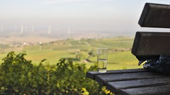 Rast :: Hiwweltour Weidenblick :: Rheinhessen (tmertens0) Tags: hiwweltour weidenblick rheinhessen siefersheim neubamberg alzey bingen bad kreuznach rheinland pfalz deutschland germany wandern landschaft heide weinberg wein wine wineyards wald forest hgel hills natur nature sonne sun herbst fall aussicht view pentaxm 50 14
