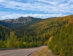 Autumn Roads (Philip Kuntz) Tags: autumnroads tamaracks larches road highway thompsonpass idaho montana autumn fall fallfoliage