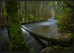 Up The Creek (Ernie Misner) Tags: chamberscreek autumn fall creek river kobayashipark park tacoma washington erniemisner nikon d800 nik capturenx2 cnx2 r8andbeonthecreek