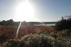 Arabako Errioxa (eitb.eus) Tags: eitbcom 27117 g1 tiemponaturaleza tiempon2016 alava laguardia miguelangellopezdelacalle