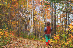 The trail (Elizabeth Sallee Bauer) Tags: 67yearold horizontal nature autumn beautyinnature boy child colorful fall forest hiking leaves nonurbanscene oneboyonly outdoors outside trail trees