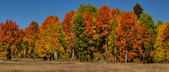 Gran Teton National Park (nebulous 1) Tags: grandtetonnationalpark grandtetonnp gtnp deadmansbar autumn wyoming landscape nature trees grass nikon nebulous1 glene