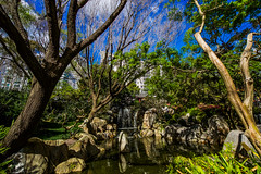 DSC01382 (Damir Govorcin Photography) Tags: water nature landscape sony a7ii zeiss 1635mm chinese gardens sydney sky waterfall rocks nsw australia flowers