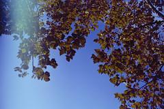 fall leaves (koreyjackson) Tags: lomo lomography film 35mm minolta x700 washington dc thank you gallery norfolk
