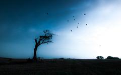 Transition   [Explored] (RonnieLMills - 2 Million Views...Thank you All :)) Tags: rihanna tree bangor county down lightroom presets transition birds slidersunday hss explore explored 51216 lonetree 17