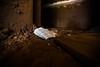 IMG_8563 (caastro) Tags: mariana minasgerais desastre barragemdofundão bentorodrigues paracatu gesteira samarco