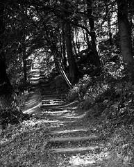 upwards (gallmese) Tags: erdly transylvania segesvr schsburg sighisoara feketefehr blackandwhite svarthvit schwarzweiss bianconero blancoynegro siyahbeyaz czarnobiay stair wooden treppe lpcs falpcs