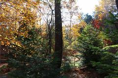 Troodos Geopark (59) (Polis Poliviou) Tags: polispoliviou polis poliviou   cyprus cyprustheallyearroundisland cyprusinyourheart yearroundisland zypern republicofcyprus  cipro  chypre   chipir chipre  kipras ciprus cypr  cypern kypr  sayprus kypros polispoliviou2016 troodosgeopark troodos mediterranean nicosia valley life nature forest historical park trekking hiking winter walking pine pines prodromos limassol paphos fall autumn geopark kakopetria