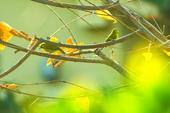 AUTUMN SKETCHBOOK (shmc5hamer) Tags: autumn colour