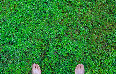 ...the other side of the fence (Mr.  Mark) Tags: green feet me field grass self photo toes stock greener bizarro fieldofdreams markboucher