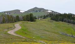 Looking toward the summit (afagen) Tags: mountain nps hiking yellowstonenationalpark yellowstone wyoming nationalparkservice mtwashburn mountwashburn chittendenroad