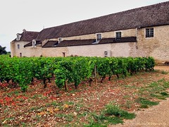 Burgundy marvelous wine fields and vineyards - Chteau Pommard (1) (jackfre 2) Tags: france wine burgundy vineyards grapes bourgogne domain pommard winefields