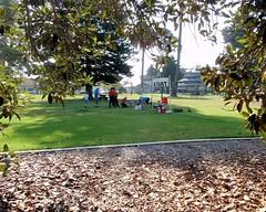 002 Beyond The Fig Tree (saschmitz_earthlink_net) Tags: california park tree start banner orienteering ventura venturacounty moretonbayfig 2015 plazapark ficusmacrophylla laoc losangelesorienteeringclub