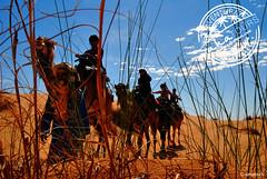 Spying - Merzouga Desert (sahatours) Tags: voyage africa travel viaje nikon desert adventure camel morocco maroc viagem marocco marruecos viaggio marrocos aventura travelphotography travelphoto desertlife