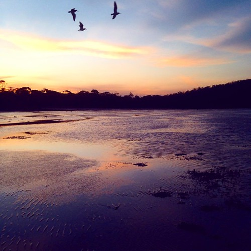First camping weekend for the season. Pity there's a fire ban tomorrow. #octoberfireban!!! #instatassie #discovertasmania #limebay #birdsofinstagram #sunsetsofinstagram