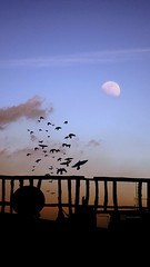 Syrian Nostalgia (mhd.hamwi) Tags: city blue sunset shadow sky moon bird birds silhouette clouds fence dark nikon sad middleeast nobody nostalgia syria damascus sham syrian     mrnobody nikond5000 mhdhamwi mohammadhamwi  syrianheart