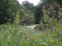 credit river 2 (spiv piddler) Tags: canada mississauga streetsville creditriver