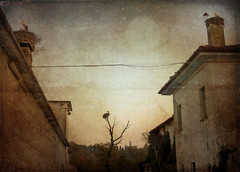 IMG_6360 stork nests and abandoned houses (pinktigger) Tags: old houses chimney italy tree bird texture abandoned nature vintage italia stork cegonha cigea friuli storch ooievaar fagagna cicogne cicogna oasideiquadris feagne