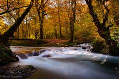 Otoño magico (Tabernilla (David Izaguirre)) Tags: españa david nikon europa bosque otoño cantabria 2470mm ucieda davidizaguirre tabernilla