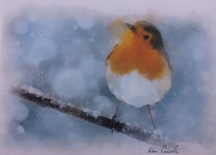Christmas Painting (alanpeacock2) Tags: merrychristmas explore seasonsgreetings winter painting watercolour robin robinredbreast birds december cockrobin christmaspainting snow christmascard art
