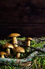 wild mushrooms (Food Photography Studio) Tags: food mushroom forest dark wildmushrooms unprocessed