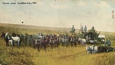 Scene Near Southwick, Ida., circa 1905 - Southwick, Idaho (Shook Photos) Tags: horses horse field team farm postcard wheat farming harvest idaho combine postcards agriculture horseteam harvesting wheatfield southwick nezpercecounty southwickidaho