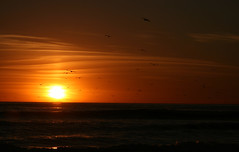 one for the birds (mark the chopper) Tags: sunset waves sea seaside night ocean birds seagulls outdoors outside beach
