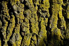 to the North (Franco Vannini) Tags: madonnadelfaggio tuscany toscana beech oak faggio quercia autunno