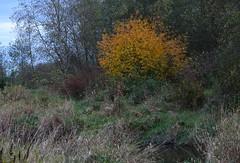 (careth@2012) Tags: fall autumn scenery scene scenic view trees nature